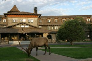 Bull Elk in front of El Tovar | Photo by Mike Buchheit