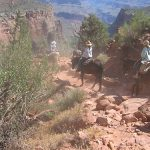 Phantom Ranch Mule Ride by Kelli Millican