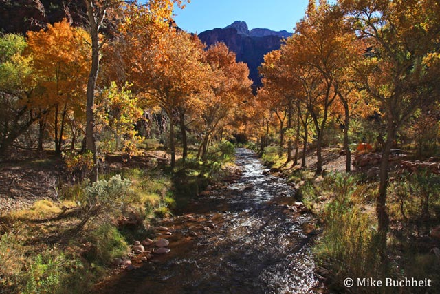 Autumn color along Bright Angel Creek | Photo by Mike Buchheit