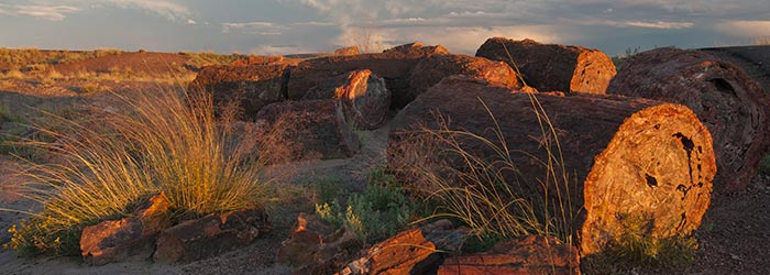 Petrified Forest's geology include gorgeous petrified logs | Photo courtesy of NPS/VIP Susan McElhinney