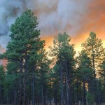 Eagle Rock Fire | Photo courtesy of U.S. Forest Service, Southwestern Region, Kaibab National Forest