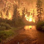 Forest Fire | USFS Photo