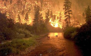 Bitterroot Forest Fire | Photo by John McColgan, BLM