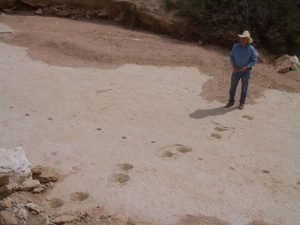 Trackways in the Verde Formation | © Wayne Ranney