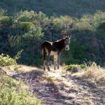 Cute burro checks us out