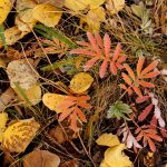 Colorful autumn leaves carpet the ground