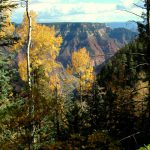 Along the North Rim's Scenic Drive