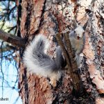 Separation Anxiety: A Squirrel's View of Climate Change