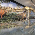Full skeleton with matching dinosaur mural behind it