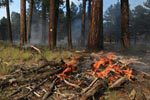 Beale Fire | Photo courtesy of Kaibab National Forest