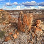 Keeping Tabs on the Neighbors: Petrified Forest National Park in the Spotlight