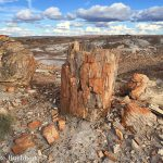 Petrified Log on Sorrel Horse Mesa | Photo by Mike Buchheit