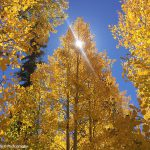 Sunbeam through Quaking Aspens | Photo by Mike Buchheit