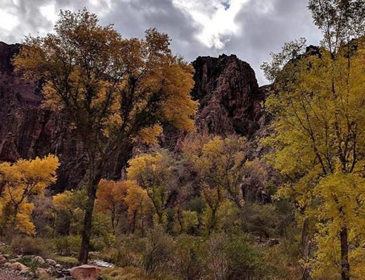 Fall Colors along Bright Angel Creek | NPS Photo