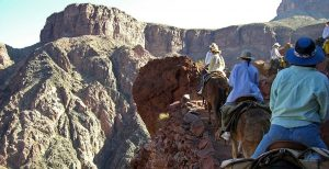 Grand Canyon Mule Ride | Photo by Kelli Millican